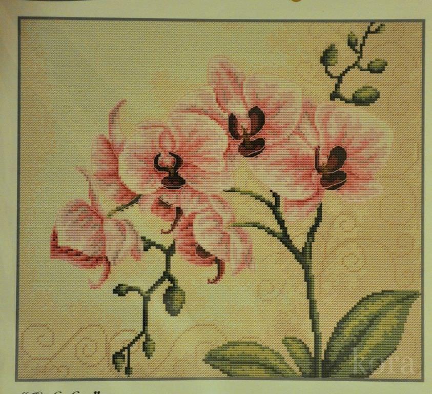 Вышивка орхидеи крестом