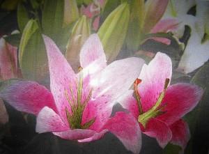 Вышитые шелком на шелке лилии