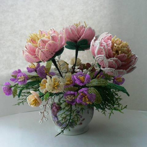 Астра цветы картинки