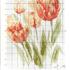 Схема тюльпанов